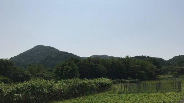 札幌の桃源郷